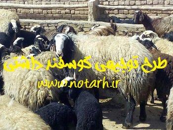 طرح توجیهی فنی اقتصادی پرورش گوسفند و میش داشتی