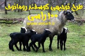 طرح توجیهی پرورش گوسفند رومانوف 100 راسی