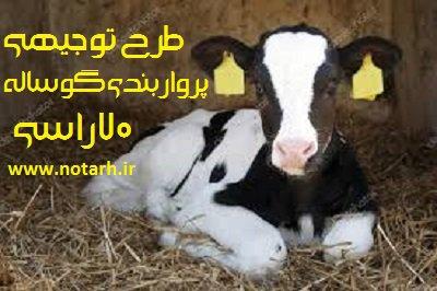 طرح توجیهی فنی اقتصادی گوساله پرواری 70 راسی گاو گوشتی