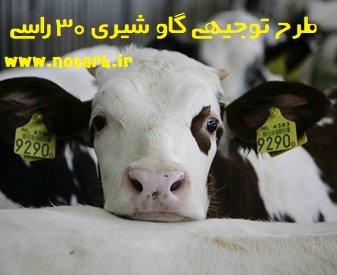 طرح توجیهی گاو شیری 30 راسی
