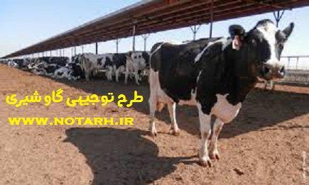 طرح توجیهی فنی اقتصادی گاو شیری 20 راسی