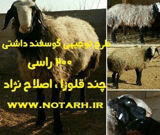 طرح توجیهی پرورش گوسفند داشتی200 راسی اصلاح نژاد سال 97