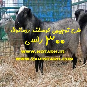 طرح توجیهی گوسفند رومانوف 300 راسی پرتولید